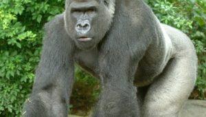 Divulgação/ Cincinnati Zoo