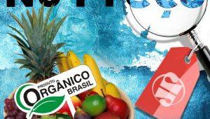 Montagem - Silvio Luiz/ JP