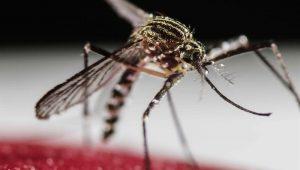 Estado do Rio registra 30.871 casos de chikungunya este ano