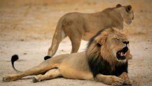 Zimbabwe Parks and Wildlife Man