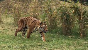 Reprodução Facebook Hamerton Zoo Park