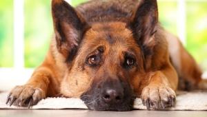 Denúncias de maus tratos contra animais sobem durante a pandemia