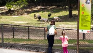 Audiências para concessão do Zoo e Jardim Botânico serão à distância