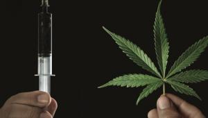 Médicos e pacientes se esforçam para quebrar preconceitos do uso medicinal da cannabis