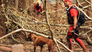 Bombeiros encontram mais um corpo no 300º dia de buscas em Brumadinho
