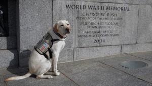 O cão Sully, que pertencia ao ex-presidente dos Estados Unidos George H. W. Bush, prestou uma homenagem ao dono nesta segunda-feira (27)