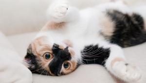 Bolsonaro sanciona nesta terça projeto que aumenta pena a maus-tratos a cães e gatos