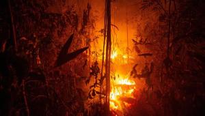 Floresta Amazônica pegando fogo