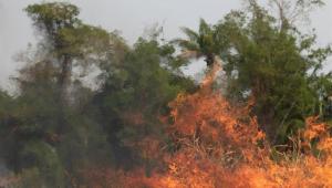 Governo trava repasse de 33 milhões de reais para a Amazônia