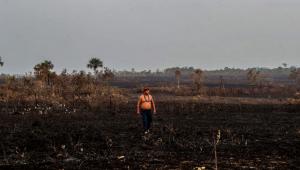 Especial Amazônia: O combate à grilagem e a luta pela preservação