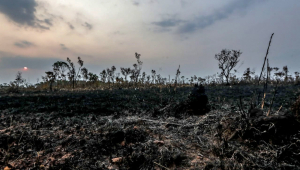 Mourão divulga dados de desmatamento da Amazônia e afirma que houve queda em julho