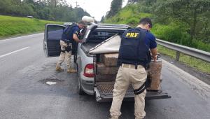 PRF apreende 598kg de maconha na região metropolitana de SP
