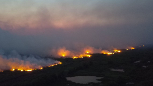 Diante de queimadas no Pantanal, secretário do MS diz que falta 'estratégia ambiental' para o Brasil