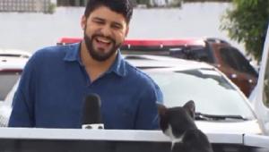 Tia de repórter adota gato 'invasor', que ganhou nome: Frajola