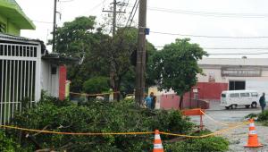Chuva derruba árvores em SP e causa apagão em Campinas