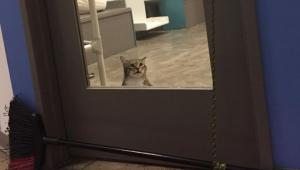 Gato vai parar na 'solitária' após libertar outros animais de abrigo