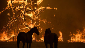 australia incendio