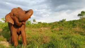 ramba-elefante