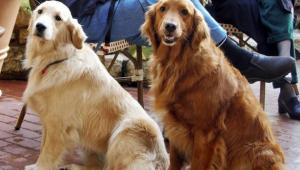 Coronavírus nos pets: Cuidados devem ser reforçados apesar deles não transmitirem a doença
