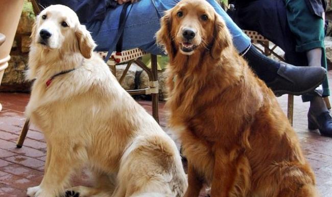'Pet terapia' ajuda a amenizar efeitos do isolamento social para idosos – Jovem Pan