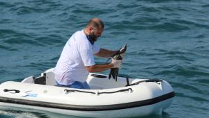 Sudeste registra aparição recorde de pinguins no litoral