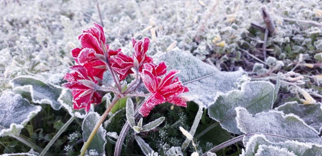Vegetação amanheceu congelada
