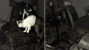 60 gatos são abandonados em guarulhos e vivem em uma casa na sujeira
