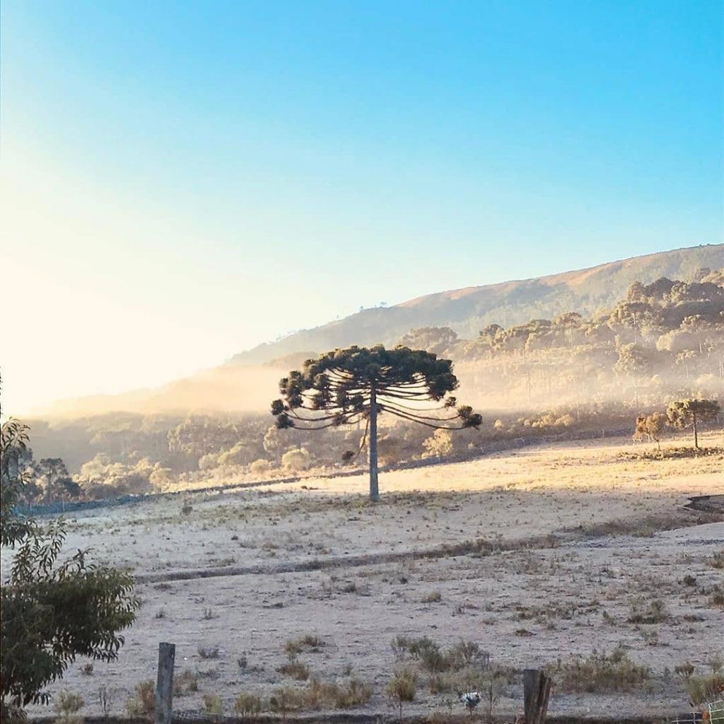 No Rio Grande do Sul, 28 municípios registraram temperaturas abaixo de 0ºC