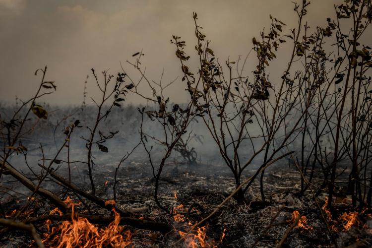 Pantanal: como é possível a maior planície alagada do mundo queimar tanto?