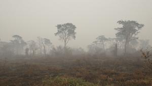 Fumaça das queimadas no Pantanal chega a Santa Catarina e provoca chuva escura
