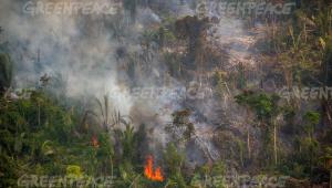 Fogo na floresta amazônica