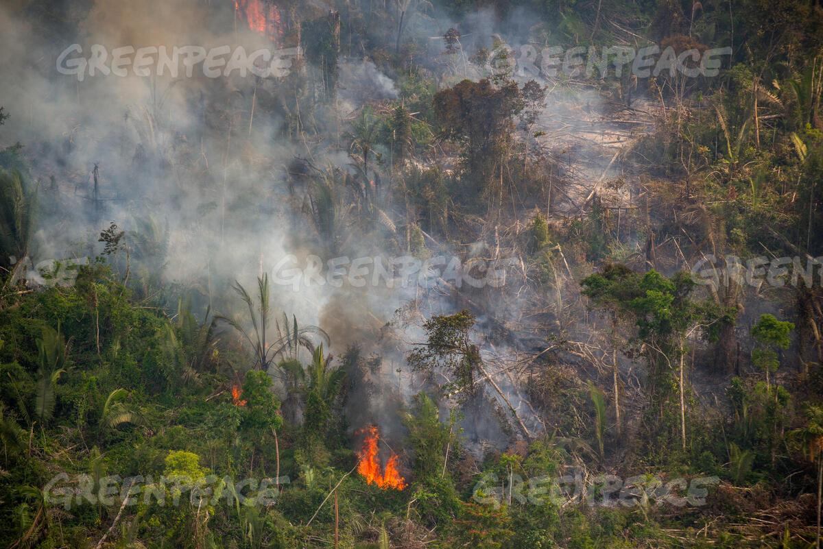 fogo na amazonia