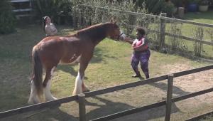 A Fazenda 12: Jojo Todynho canta e dança com cavalo para fugir de tretas na cozinha