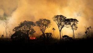 fogo amazonia greenpeace
