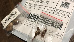 Sementes da China: 5 estados brasileiros já receberam pacotes misteriosos