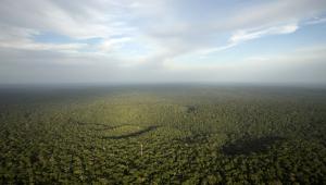 Você sabia que 40% da Amazônia não fica no Brasil?