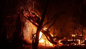 Por falta de recursos, Ibama determina retorno dos brigadistas de incêndio florestal