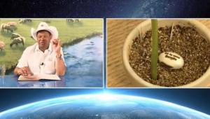Ministério da Saúde deve informar se sementes de feijão vendidas por pastor curam a Covid-19