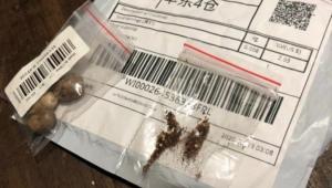 China vê indícios de fraude em pacotes misteriosos com sementes enviadas ao Brasil