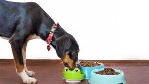 Cobasi faz Black Friday com descontos de até 70% em produtos para pets