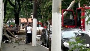 Centenas de árvores estão doentes em São Paulo, e a prefeitura sabe, mas nada faz