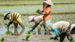 Dois terços dos países tiveram diminuição na média salarial, aponta OIT