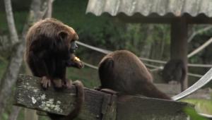 Zoológico na Grande São Paulo vira exemplo no tratamento de animais vítimas de tráfico