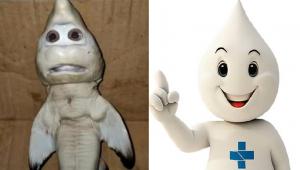 Tubarão com feições humanas encontrado na Indonésia é comparado com Zé Gotinha