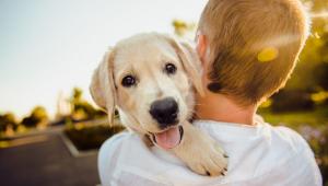 A escolha da dieta vai depender da aceitação do animal, bem como da rotina e da disponibilidade financeira dos donos