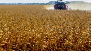 Máquina colhe milho em uma plantação em Mato Grosso