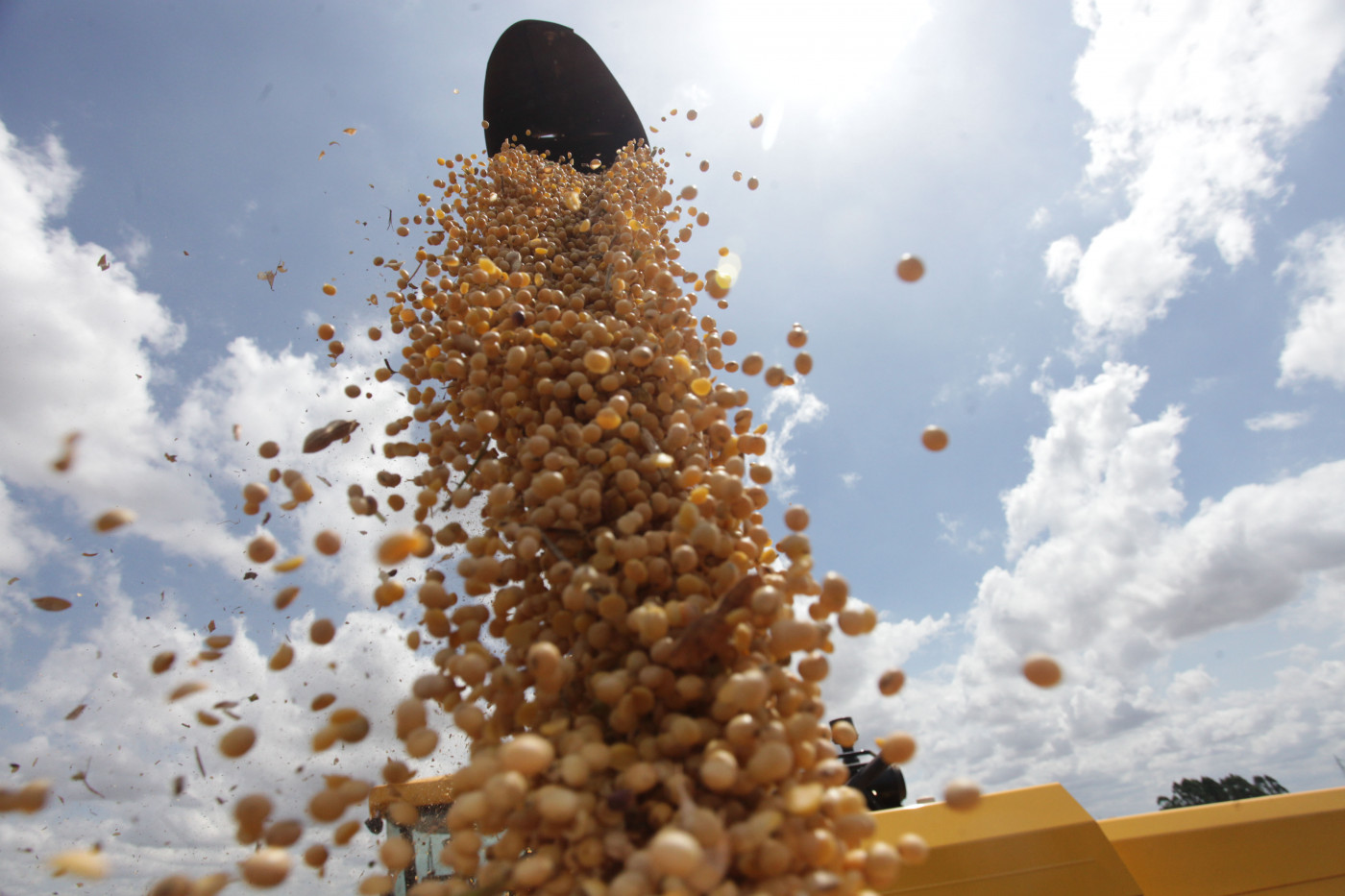 Na foto, trabalhadores rurais, caminhão, colheitadeira durante colheita de soja.