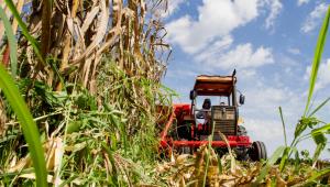 Colheita de milho em propriedade de pequeno porte em propriedade