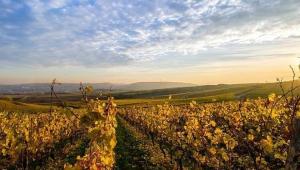 Vinícola na França é mostrada em primeiro plano, com uma cidade e o céu azul aparecendo no horizonte