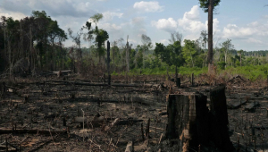 Área de mata devastada por queimada